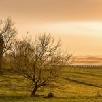 Sunrise over a hayfield, Iowa County, Wisconsin