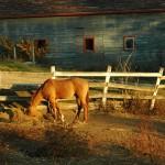 Horse barn, Iowa County, Wisconsin