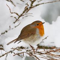 Bird in a snowy tree