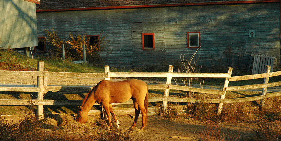Farm horse - photo by Terry McNeil
