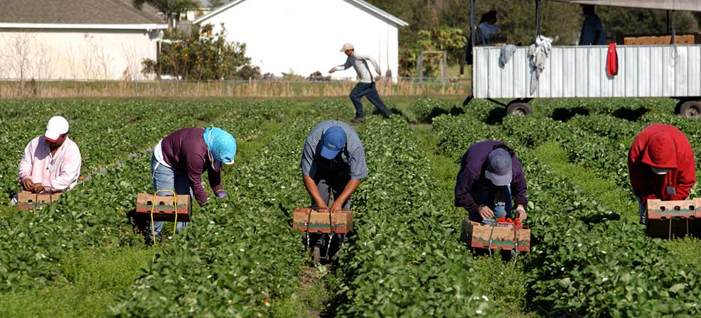 A Salute to All Farm Workers