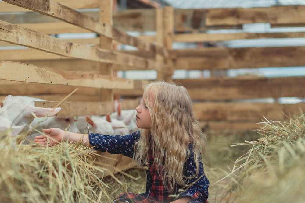 A Farm Girl at Heart